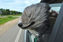 Dog News Stories