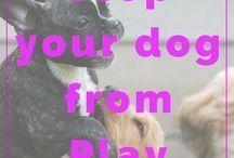 """""""Bad Doggie Behavior Tips"""""""