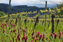 Viticultural Practices / Cover crops, row spacing, irrigation, grafting