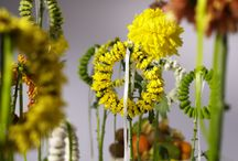 Chrysantheme 2008