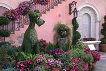 Disney Gardens