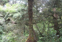 Amaizing Trees