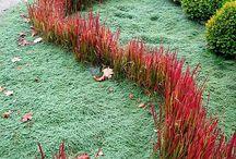 Pomysły ogrodowe