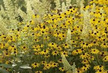 Keltainen puutarha