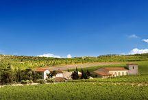 Château l'Hopitalet / Visite du vignoble et des chais au Château l'Hospitalet, dans l'appellation Coteaux du Languedoc dans le Languedoc Roussillon Winetourbooking.com