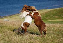 HORSES WILD / by Mary Dumke