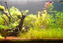aquariums and animals