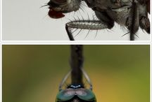 beautiful bugs / by Betsy Thomson