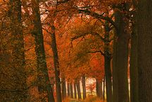 photos automne