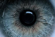 BODIES: eyes