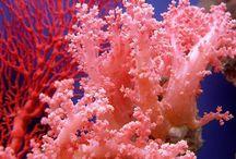 Jade De Coral / Los corales para hacer joyería se extraen principalmente en el Mar Mediterráneo y la costa noroeste de África. Encuentra más información en: https://tendenciasjoyeria.com/jade-de-coral/