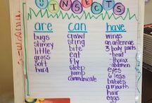 Kindergarten insect inquiry