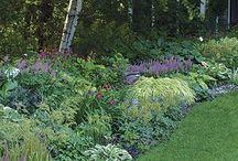 Gardens / Garden ideas for new house