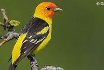 Birds / All About Birds / by Lisa Decker