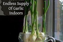 growing vegetables..