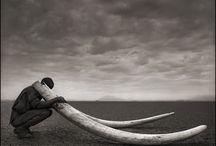 Nick Brandt / ING –   /   / 1964 – Documentaria/Naturalistica –