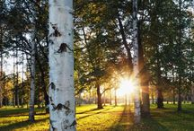 my own taken pictures / Finnature, suomalaisia maisemia
