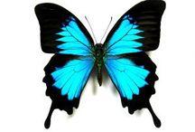 Short motivational story - The Story of the Butterfly http://mindxmaster.blogspot.com/2015/10/short-motivational-story-story-of.html