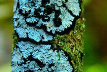 Lichens, mosses & fungi