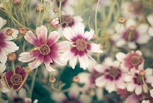 Floral Air❀ <3 ❀L'air fleuri