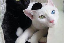 Cute Kitty's