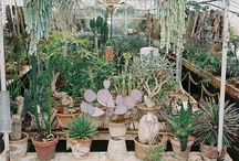 cactus gardening