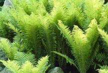 Palm tree cycads ferns hedges plants