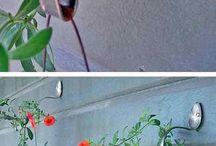 Горшочки, цветочки.