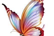 OBRAZY-Motyle
