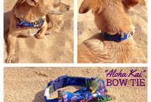 Bow Ties / Add a stylish detail to your doggie's furry attire with an Island Doggie bow tie!  He will look mighty dapper and sure to impress his peers.  Be sure to keep your dog in an enclosed area such as a dog park and under close supervision when not using a harness and lead.  Handmade bow tie slides onto neckband with Velcro closure at back.