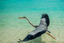 heron brids / by Siesta Key Bungalows
