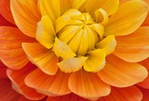 Orange || Yellow / Inspired by The Eclectic Summer Collection