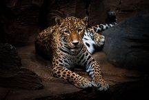 ... // Wildlife // / #wildlife #animal #nature