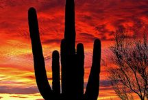 Arizona / Great photos and places to see in Arizona