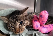chip-ins / Check out our cats in need. These cats have medical bills and other needs, please check out their websites and donate and share! / by Anjellicle Cats