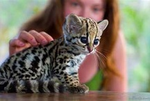 Cute Animals  / by Hilary Butt