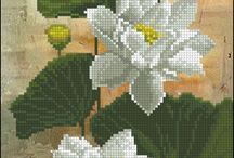 beyaz gul