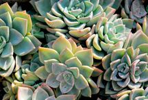 SucCuLeNtS / by Maille EnLair