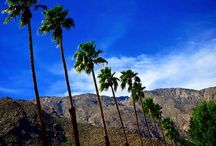 Springs Break Getaways / Spring Break for Families in Palm Springs California. Vacation Rental Pool Homes with great temperatures and mountain views.