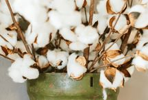 Flores y algodones