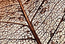 Textures & Fabrics