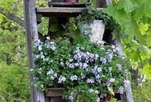 Garden/ piha ja puutarha