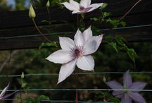 Flowers / Kawachinagano Osaka Japan at Hana no bunka en. Flower clture garden