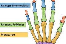 nomes de ossos