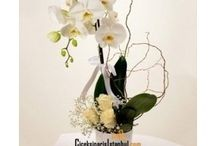 Orkide Çiçekleri / Orkide çiçekleri renkleri beyaz orkide, pembe orkide, fuşya orkide, mavi orkide, sarı orkide, benekli orkideler olmak ile beraber çeşitli gül, lilyum papatya gibi kesme çiçekler ile de orkideli aranjman çiçekleri hazırlanarak sevdiklerinize orkide siparişi verebilirsiniz. Aynı gün teslimat seçeneği ile ödemelerinizi kredi kartı, havale/eft veya mail order ile yapabilirsiniz.