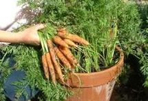 jardins e agricultura