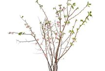 Branches for Nora's Wedding / by Sydney Mainster
