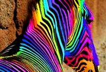 Haut en couleurs