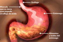 La salud intestinal