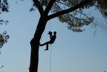 Carbon Cayon Tree Adventure